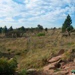 Hedianga-Pretoria-KyleRedelinghuys-16