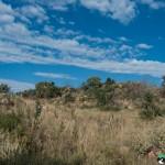 Hedianga-Pretoria-KyleRedelinghuys-18