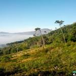 NewlandsForest-CapeTown-KyleRedelinghuys-12