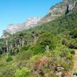 NewlandsForest-CapeTown-KyleRedelinghuys-14