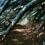 NewlandsForest-CapeTown-KyleRedelinghuys-16