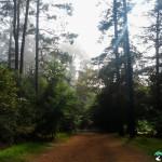 NewlandsForest-CapeTown-KyleRedelinghuys-18