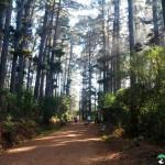 NewlandsForest-CapeTown-KyleRedelinghuys-19