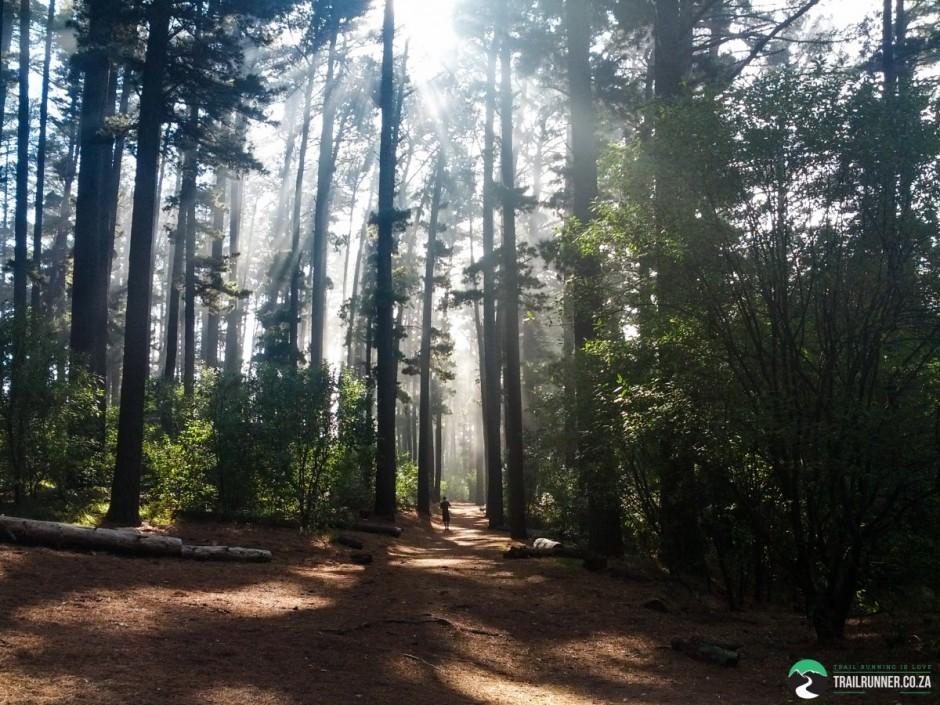 NewlandsForest-CapeTown-KyleRedelinghuys-20