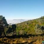 NewlandsForest-CapeTown-KyleRedelinghuys-7