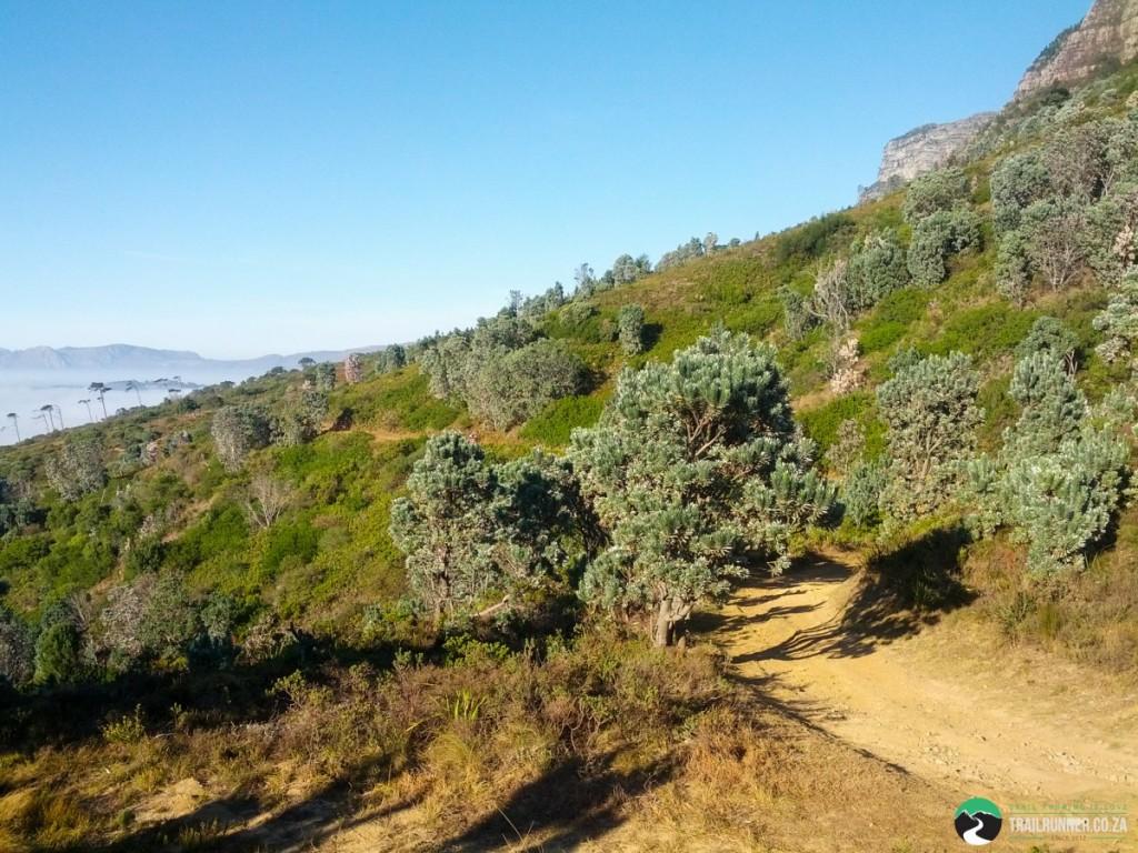 NewlandsForest-CapeTown-KyleRedelinghuys-8