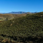 Recce_Run__Drakensberg_Alpine_Heath-17