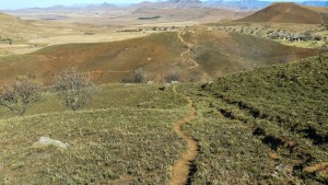 Recce_Run__Drakensberg_Alpine_Heath-18