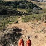 Recce_Run__Drakensberg_Alpine_Heath-22