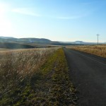 Morning_Run__Drakensberg_Alpine_Heath-10