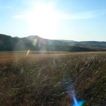 Morning_Run__Drakensberg_Alpine_Heath-12