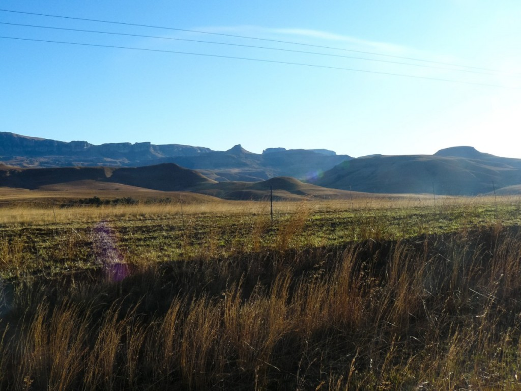 Morning_Run__Drakensberg_Alpine_Heath-15