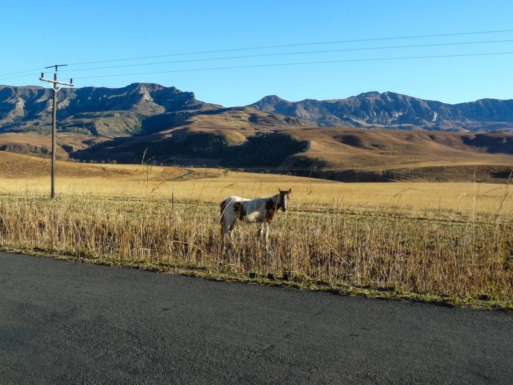 Morning_Run__Drakensberg_Alpine_Heath-19