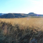 Morning_Run__Drakensberg_Alpine_Heath-23