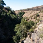 The_Cavern__Drakensberg_Alpine_Heath-20